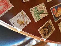 BUOVA ZELANDA UCCELLI 1 VALORE - Stamps