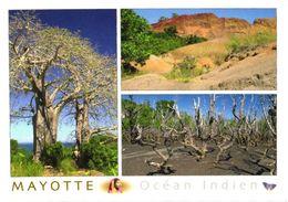 France:Mayotte Island Views, Mangrove - Mayotte