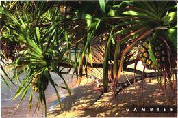 Gambier Island View - Mikronesien