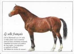 LE SELLE FRANCAIS - Caballos