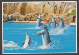 116542/ Parc Astérix, *Le Salut Des Dauphins* - Delfines