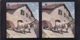 MERAN. FERME, AVEC ATTELAGE DE BOEUFS PRES DE GRATSCH. CHROMOPLAST-BILD SERIE 11 Nº 84. PHOTO STEREOSCOPIE.  -LILHU - Stereoscopic