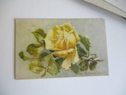 Catharina Klein Illustrateur Rose Jaune - Klein, Catharina