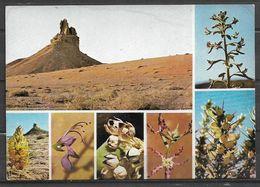 SAUDI ARABIA POSTCARD , VIEW CARD DESERT FLOWERS OF SAUDI ARABIA - Arabie Saoudite