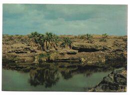 SAUDI ARABIA POSTCARD , VIEW CARD VADI JIZAN - Arabie Saoudite