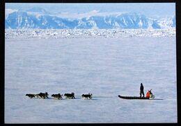 Greenland  Cards, Dogsledding In West Greenland  ( Lot 270 ) - Groenlandia