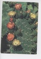 Figuier De Barbarie En Fleur - Flore De Tunisie (cp Vierge) - Cactus