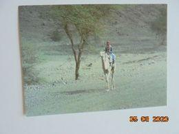 Saoudien Au Environ De Medine. Photo C. Laville. OFMI Garamont - Arabie Saoudite