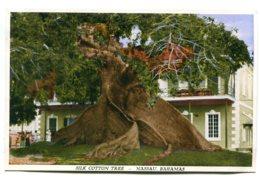 BAHAMAS - Nassau -  Silk Cotton Tree - Bahamas