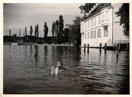 Photo Originale Baignade & Störtebecker, Le Corsaire Rouge Faisant La Planche En 1936 - Anonyme Personen