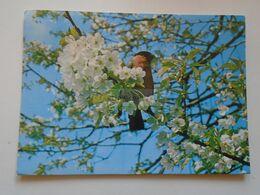 D172894 Sweden Sverige  -Bird Gimpel - Bouvreuil -Bullfinch -    1975 MALMÖ    Cancel - Suède
