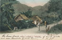 Road To Castleton Hand Colored  P. Used  To USA . Banana Trees - Jamaica
