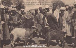 Ouzbékistan Ou Russie - Types De L'Asie Centrale - Lutte De Moutons Chevres Goat - Uzbekistan