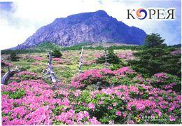 South Korea:Hallasan National Park View - Corea Del Sud