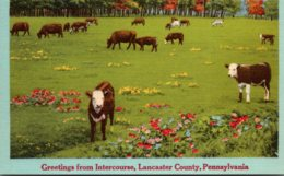 Pennsylvania Lancaster County Greetings From Intercourse - Lancaster