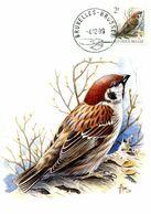 15189096 BE 19891204 Bx; Oiseau, Buzin, Moineau; CM Cob2347 - Cartes-maximum (CM)