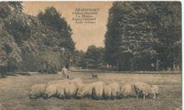 Brasschaat - Brasschaet - Château Osterrieth - Les Moutons - Kude Schapen - 1923 - Brasschaat
