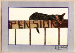 Ani015 LES CHATS Barrière Pension Chat CAT Cats KATZE Katzen GATO Gatos Katten Photo Pierre PUTELAT Molines N°22 - Gatti