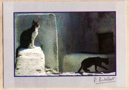 Ani016 LES CHATS Chat CAT Cats KATZE Katzen GATO Gatos Katten Photo Pierre PUTELAT Molines N°21 - Gatti