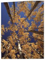 (H 20) Germany (with Stamp) Trees - Alberi