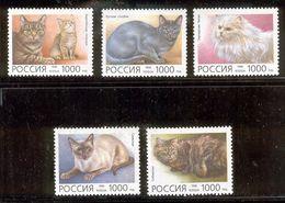 RUSSIA 1996 Domestic Cats; Scott Catalogue No(s). 6307-6311 MNH - 1992-.... Federation