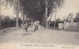 44-MACHECOUL L AVENUE DES PLATANES - Francia