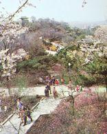 COREE Du Nord La Colline De Moranbong Au Printemps à PYONGYANG North KOREA Moranbong Hill In Spring - Korea (Noord)