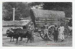Native Bullock Cart, Ceylon - Plate 18 - Sri Lanka (Ceylon)