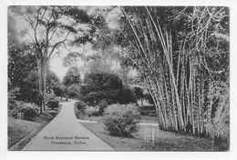 PERADENIYA - Royal Botanical Gardens - John & Co. - Sri Lanka (Ceylon)