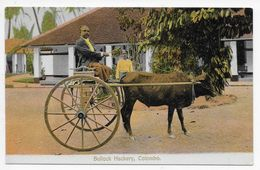 COLOMBO - Bullock Hackery - Sadoon - Sri Lanka (Ceylon)