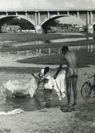 Inde Jour De Lessive A La Riviere Vache Ancienne Photo Defossez 1970's - Ethniques, Cultures