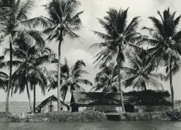 Indonésie Bords De Mer Huttes Palmiers étude Ancienne Photo Defossez 1970's - Ethniques, Cultures