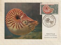 9/353 Carte Maximun 1ER JOUR NOUMEA NAUTILE AQUARIUM 1962 - 1960-69