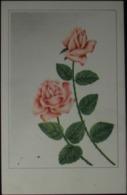 ROSA Rose - Formato Piccolo Non Viaggiata - Blumen