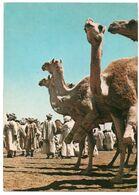 SUDAN - CAMEL MARKET OMDURMAN - Sudan