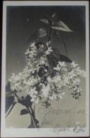 Ramo Di Fiori - Mughetti - Viaggiata Nel 1906 Formato Piccolo E Retro Indiviso - Botanik