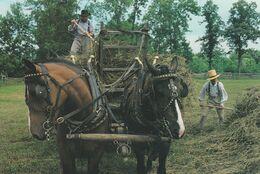AGRICULTURE ATTELAGE RAMASSAGE DU FOIN - Cultures
