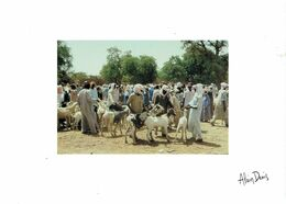 CPM TCHAD CHARI-BAGUIRMI DOUGUIA - Marché Du Lundi - 1993 - Chad
