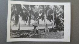 SEYCHELLES - SEYCHELLEN INSELN - ANSE BOILEAU - DER KOKOSSCHÄLER - RPPC - Seychelles