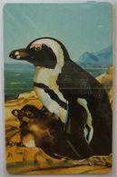 NAMIBIA - Chip - Telecom - NMB-25 - N$50 - Penguins - Mint Blister - Namibie