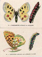 V845Aa   Lot De 2 Images Papillons Chenilles Chicorée Arlatte & Co Bleu Argent - Butterflies