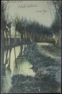 Lungo Fiume - Paesaggio Fluviale Con Alberi - Formato Piccolo Viaggiata Nel 1902 - Bäume