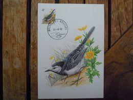 OCB Nr 2474 Fauna Buzin   Stempel   Bruxelles - Brussel - 1985-.. Birds (Buzin)