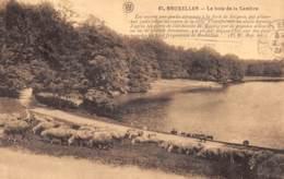 BRUXELLES - Le Bois De La Cambre - Parks, Gärten