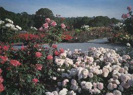 Postcard Roses / Rose Garden At Rosemoor Torrington Devon England [ RHS ] My Ref B24432 - Blumen
