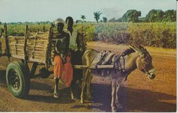 MALI VUE TYPIQUE DE LA RÉGION DE SEGOU - Mali