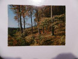 Arbres - Bäume