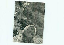 Marmotte G 598 - Sonstige