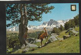 CT   VALLE D'ANDORRA - Andorra