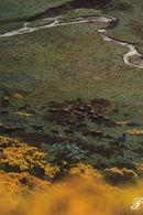 Cpm 10x15. PRESTIGE . CANTAL   N° 15-P4. Troupeau De Vaches Dans La Prairie - Fotografia